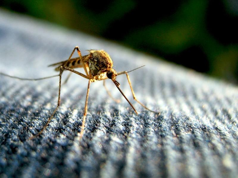 lutter contre les moustiques