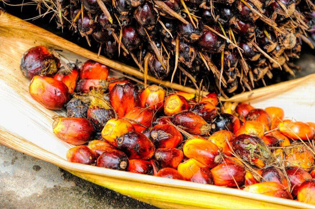 Les fruits de palmier